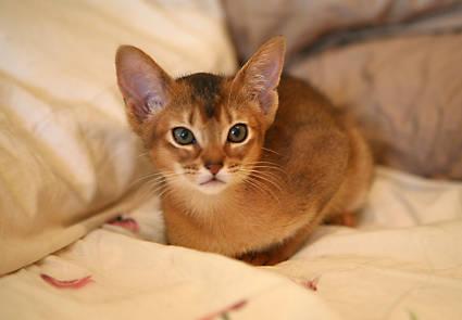 cassiel-kitten.jpg