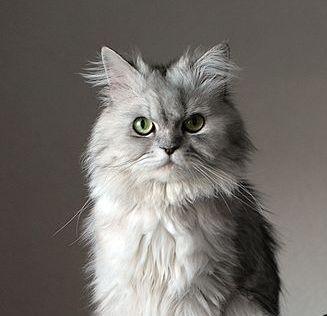 Cat Core Uk