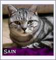 Sain_icon.jpg