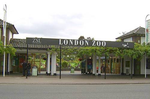 London Zoo - Witchcraft and Wizardry