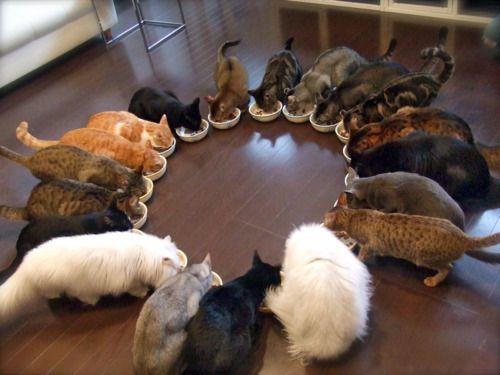 xylina-apartmentcats.jpg