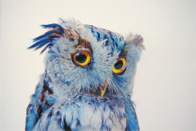 megan-owl.jpg