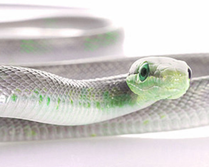 Sal the Snake