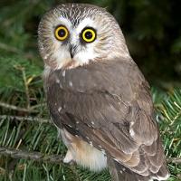 owl-tiny.jpg