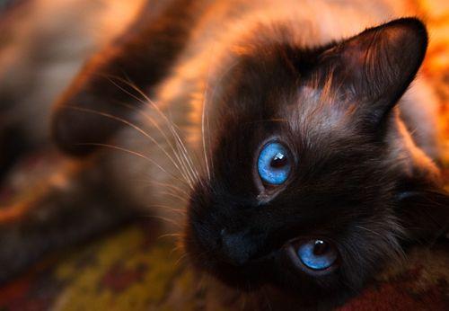 xylina-cat.jpg